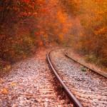 fall-train